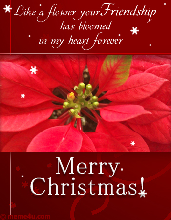 Christmas  on Poinsettia Flower Card  Floral Christmas Ecard  Floral Xmas Greetings